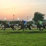 ZEturf paardenraces weddenschappen