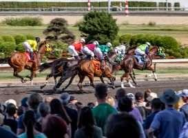 vergunning paardenraces 2022